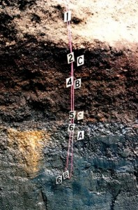Stratigraphy of the Mammoth Site